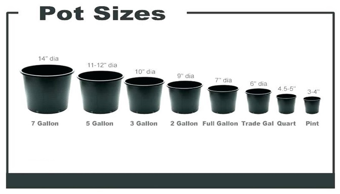 نرخ گلدان پلاستیکی گلخانه