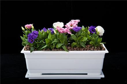 گلدان پلاستیکی تزئینی ارزان